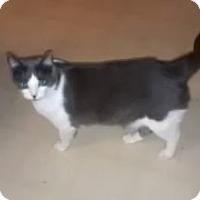 Adopt A Pet :: Chester - Tempe, AZ