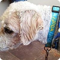 Adopt A Pet :: Sparky - Kingwood, TX
