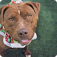 Adopt A Pet :: Aurora - San Diego, CA