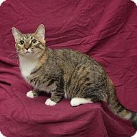 Adopt A Pet :: Emma - Chattanooga, TN