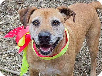 Boxer/Terrier (Unknown Type, Medium) Mix Dog for adoption in Kingston, Tennessee - Holly