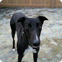 Adopt A Pet :: Chris - Swanzey, NH