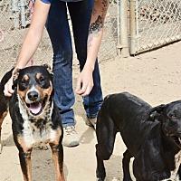 Adopt A Pet :: Sylvester - Santa Barbara, CA
