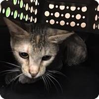Adopt A Pet :: Kimmy - Gulfport, MS