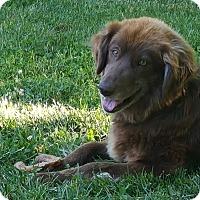 Adopt A Pet :: Grier - Minnetonka, MN