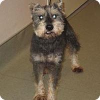 Adopt A Pet :: Nixon - Wildomar, CA