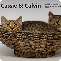 Adopt A Pet :: Calvin & Cassie - Brockton, MA