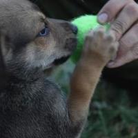 Adopt A Pet :: INDY - Spruce Grove, AB
