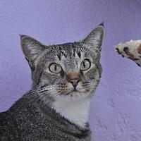 Adopt A Pet :: SAMPSON - Alamogordo, NM