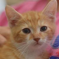 Adopt A Pet :: Frank - Madison, NJ