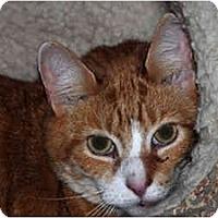 Adopt A Pet :: Tropicana - Warminster, PA