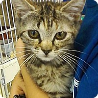 Adopt A Pet :: Mandy - Riverhead, NY
