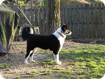 Border Collie Mix Dog for adoption in Nashville, Tennessee - Maggie