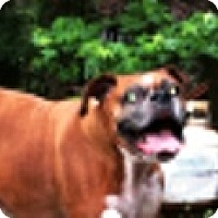 Adopt A Pet :: Quincy-Adopted! - Turnersville, NJ