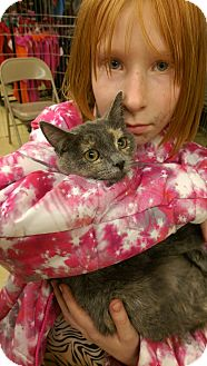 Domestic Shorthair Kitten for adoption in Ogden, Utah - Terry
