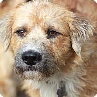 Adopt A Pet :: Clyde - Meet Him!! - Norwalk, CT