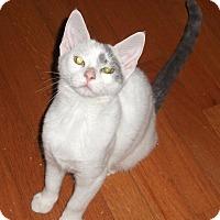 Adopt A Pet :: Morgantown Moppets! - Colmar, PA