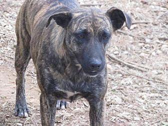Dutch Shepherd Mix Dog for adoption in Remlap, Alabama - Missy