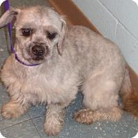 Adopt A Pet :: Skippy - Orlando, FL