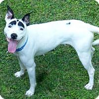 Adopt A Pet :: Frida - Alpharetta, GA
