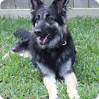 Adopt A Pet :: Aria - Houston, TX