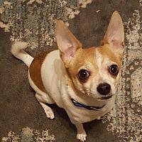 Adopt A Pet :: Tino - Troy, MI