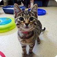 Adopt A Pet :: Sammy - Belleville, MI