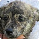 Adopt A Pet :: Alioth