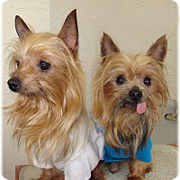 Adopt A Pet :: Missy and Mackey - Palm City, FL