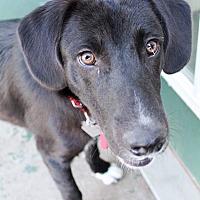 Adopt A Pet :: Spot - Broken Arrow, OK