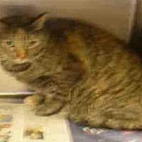 Adopt A Pet :: A1723817 - Los Angeles, CA