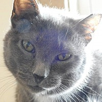 Adopt A Pet :: Chardonnay - Green Bay, WI