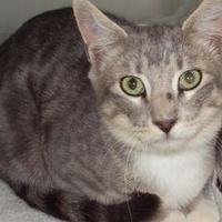 Adopt A Pet :: Santos - Robinson, IL