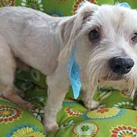 Adopt A Pet :: Gallagher - Fairmont, WV