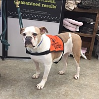 Adopt A Pet :: Jenny - Park Ridge, NJ
