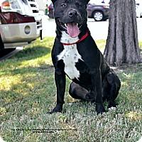 Adopt A Pet :: Thor - Irving, TX