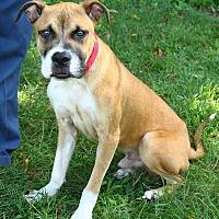 Adopt A Pet :: Joey - Oakland, NJ