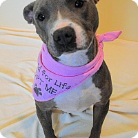 Adopt A Pet :: Laila - Aurora, CO