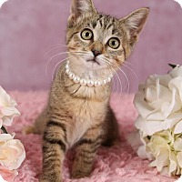Adopt A Pet :: Sophia - Plymouth, MN