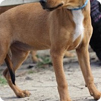 Adopt A Pet :: Nova - Von Ormy, TX