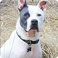 Adopt A Pet :: DEUCE - Memphis, TN