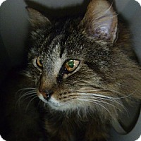 Adopt A Pet :: Suzie Q - Hamburg, NY