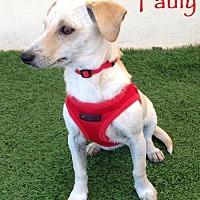 Adopt A Pet :: Pauly - San Diego, CA