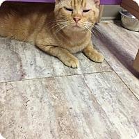 Adopt A Pet :: Saturn - Orleans, VT