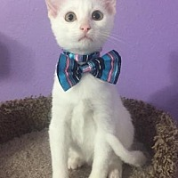Adopt A Pet :: Cal - Santa Fe, TX