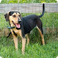 Adopt A Pet :: LIBBY-FOSTER NEEDED - Washington, DC