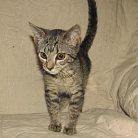 Adopt A Pet :: Gear (baby boy) - Spring Grove, PA