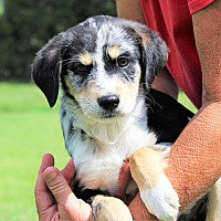 Adopt A Pet :: Jerry Reed~adopted!! - Southbury, CT
