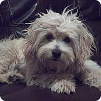 Adopt A Pet :: CHESTER - Stockton, CA