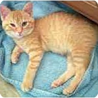 Adopt A Pet :: Elsie - Marietta, GA
